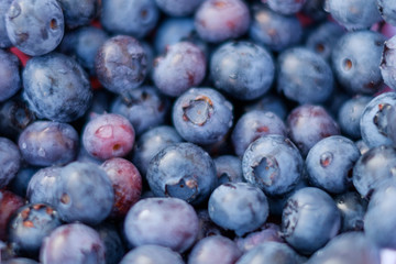 fresh blueberry background , blueberries closeup
