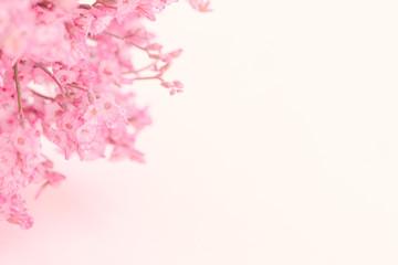 Pink flower on  soft pink paper background.