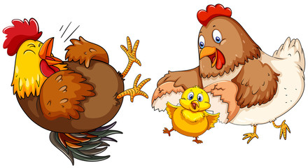 Chicken family with little chick