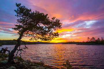 Wall Mural - Pine on the cliff. Pine on the background of the sunrise.
