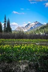 Tenquile Lake, British Columbia, Canada - July 8th, 2017