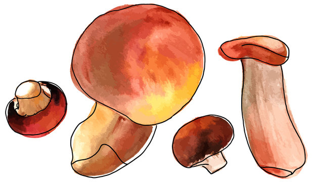 Isolated vector and watercolor mushrooms drawings on white