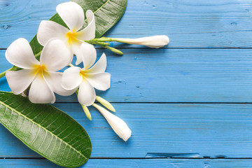 Photo sur Plexiglas Frangipanni Beautiful white flower and green leaves on blue wooden table on top view.Background and Copy space. Plumeria Flower.