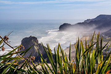 Lookout over Piha on a Foggy Morning with Flax in the Foreground