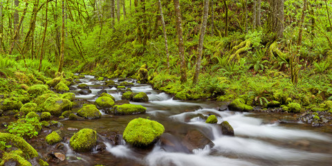 Printed kitchen splashbacks River Gorton Creek in lush rainforest, Columbia River Gorge, USA