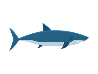 Great white shark isolated on white background. Vector illustration in flat or cartoon style.