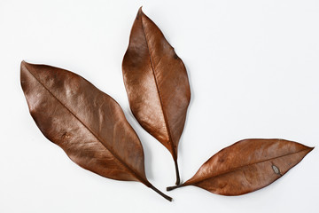 Three dry leaves on a white background