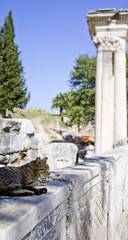 Ephesus Temple Cat 4