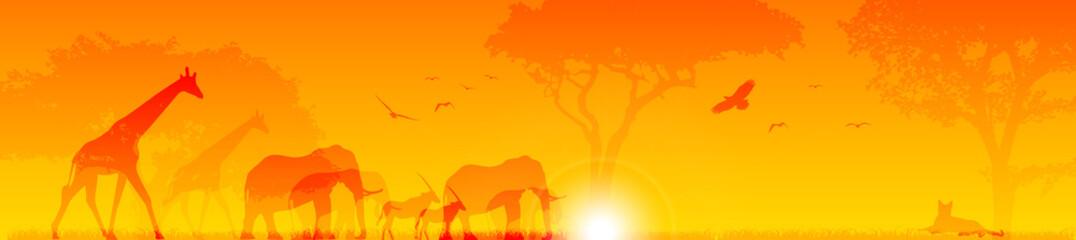 animali, sole, savana