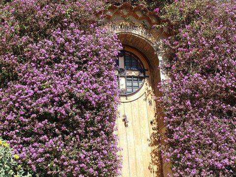 Porte d'entrée - Borme les mimosas