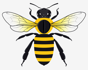 Detailed Honey Bee Vector Illustration