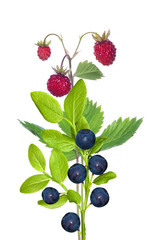 red wild strawberries and blueberries with green leaves