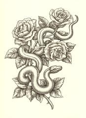 Рисунок тушью, змея и розы.