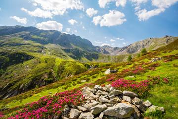 Val Grosina - Val Pedruna - Valtellina (IT) - Panoramica estiva della valle con rododendri fioriti  Wall mural