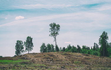 Deforestation. Problem of the 21st century.