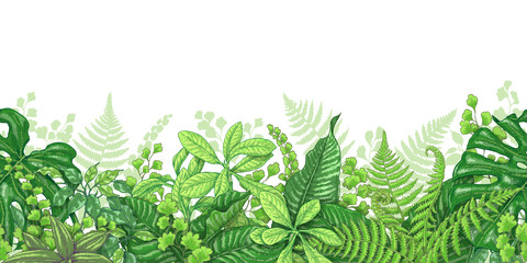 Tropical Plants Line Horizontal Border