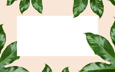 green leaves over white blank space on beige