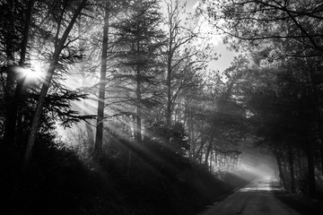Powerful sunrays cutting through the mist on a road, in the midst of some trees in the shadows