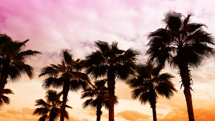 Silhouette palm trees in the twilight sky evening background