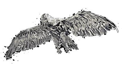 Abstract eagle or hawk geometric image