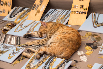 Funny red cat sleeps on counter with jewelry at handicraft market