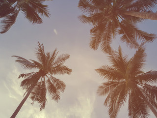 abstract soft focus on coconut palm trees in evening hour background with vintage filter effect,tropical backdrop concept.