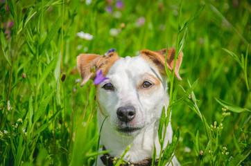 портрет собаки в зеленой траве