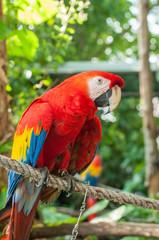 Portrait Single macaw bird in green park.