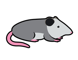 cartoon vector illustration of an opossum