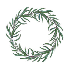 Wreath of hand drawn melaleuca twigs, branches, decoration element with place for text, sketch vector illustration isolated on white background. Hand drawn wreath of beautiful green melaleuca twigs