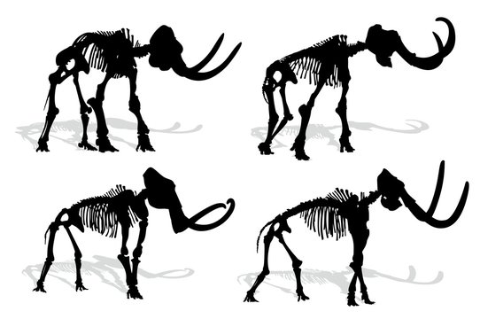 Skeleton of mammoth.