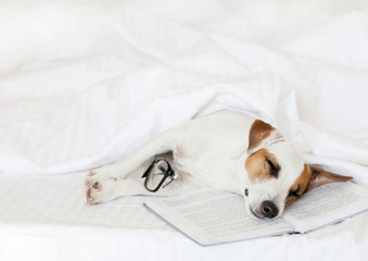Sleeping dog with book