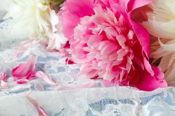 Splendid pink peonies flowers on lace