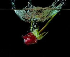Falling into the water a red rose, creating a splash
