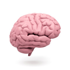 Human brain isolated on a white background. 3d rendered illustration