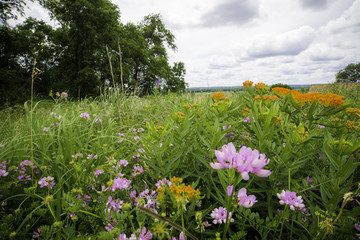 Bloomington MN National Wildlife Refuge landscape. pink and orange flowers with trees and big sky