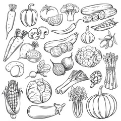 Vector hand drawn vegetables icons set