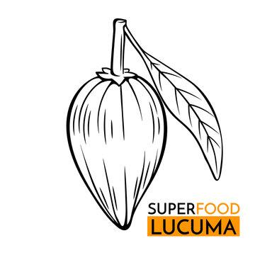 vector icon superfood lucuma