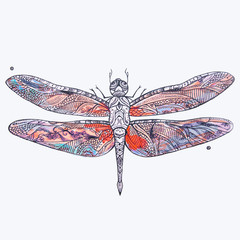 Sketch of a beautiful red dragonfly on a white background.