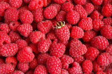 Fresh and sweet raspberries background
