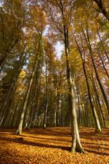 Autumn Forest./Kashubia,Poland
