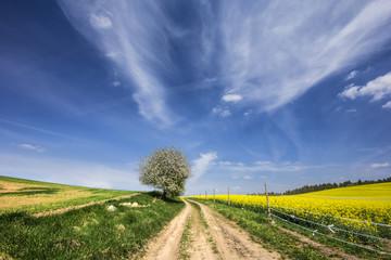Springtime./ Kashubia, Poland