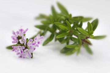 Thymian Zweige geschnitten und Blüten vor hellem Hintergrund (Thymus)