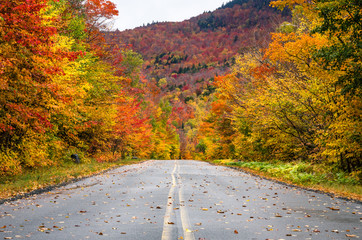 Straight Mountain Road Trough a Colourful Forest of Maple Trees in the Adirondacks, NY, on a Cloudy Autumn Day
