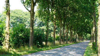 A country road in Belgium during summer.