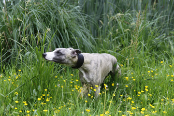 Cute dog sniffing grass