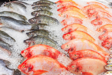 Papiers peints Poisson Frozen Nile Tilapia Fish in a Pile of Ice at supermarket, Mixed fish for sale on a market Background with fresh fish with ice hake