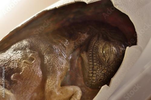恐竜化石の骨格標本