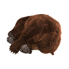 3D Rendering Grizzly Bear on White