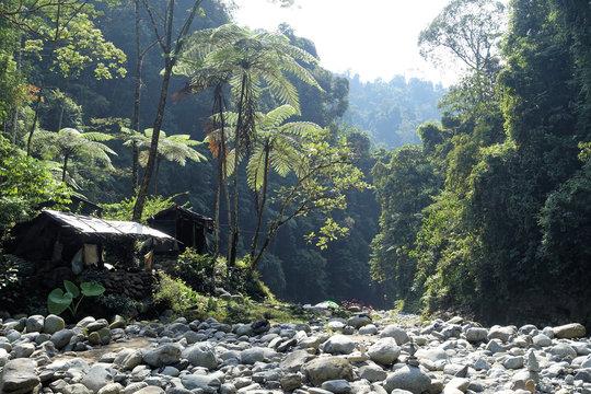 Regenwald bei Bukit Lawang, Sumatra